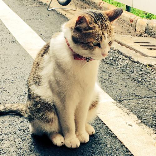 160623_takahashi01
